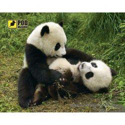 pod mishkou pandy